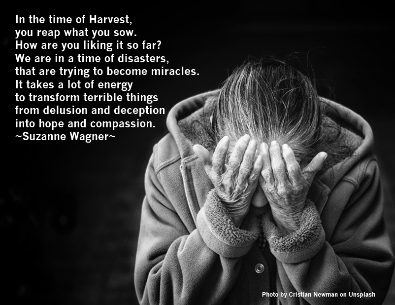 Suzanne Wagner Quote You Reap What You Sow Suzanne Wagner