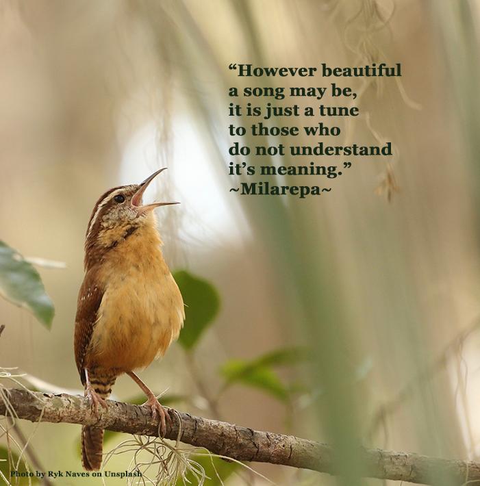 brownbirdsingingmilarepa2sw