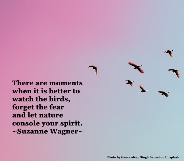 flyingbirdsinskyquotesw